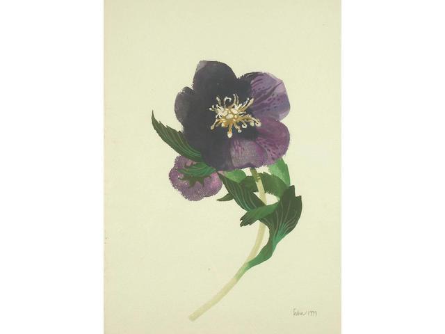 Mary Fedden (British, b.1915) Hellebore 42 x 28.5 cm.