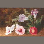 Manner of George Clare a still life of flowers on a mossy bank; a companion 20.5 x 31cm