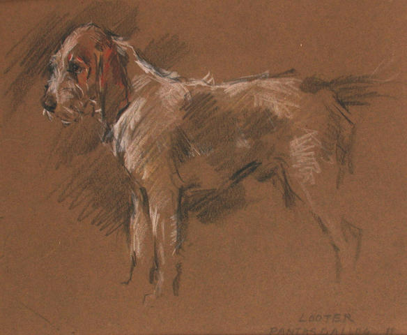 George Denholm Armour (British, 1864-1949) Portrait of 'Looter' 19 x 23.5 cm, (2).