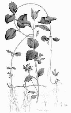 CURTIS (WILLIAM) Flora Londinensis: or, Plates and Descriptions of such Plants as Grow Wild in the Environs of London, 2 vol.