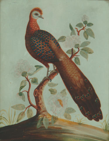 An embossed card picture of a peacock,