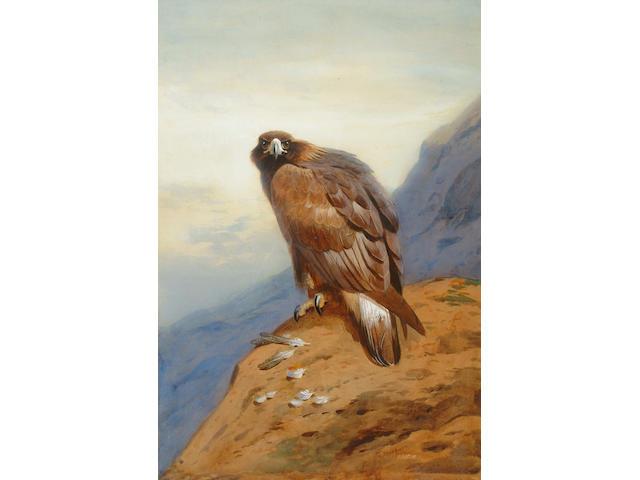 Archibald Thorburn (British, 1860-1935) Golden Eagle 54 x 37 cm.