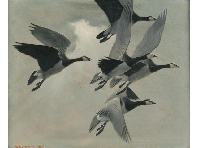 Sir Peter Scott (British, 1909-1989) Barnacle Geese 38 x 45.5 cm.