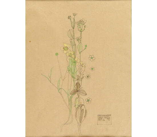"Charles Rennie Mackintosh (1868-1928) ""Brookweed, Holy Island"", 22.5cm x 17.5cm"