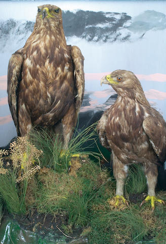 A Pair of Golden Eagles, late 19th century,