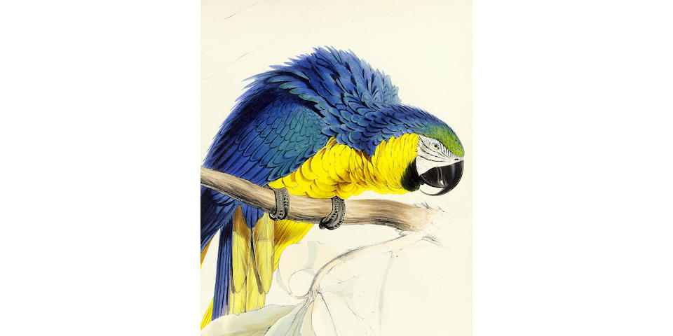 LEAR (EDWARD) Illustration of the Family of Psittacidae, or Parrots: the greater part of them specie