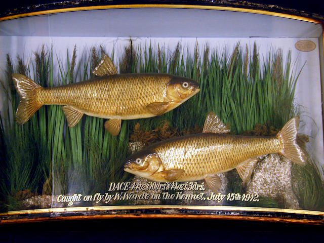A pair of Dace set in a gilt lined bow front case,