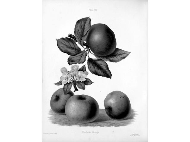 GRAVES (HENRY BULL) and ROBERT HOGG The Herefordshire Pomona, Containing Original Figures and Esteemed Kinds of Apples and Pears, 2 vol.