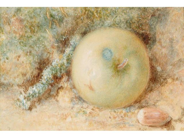 William Henry Hunt (British, 1790-1864) Still Life of an apple, 11 x 15 cm.