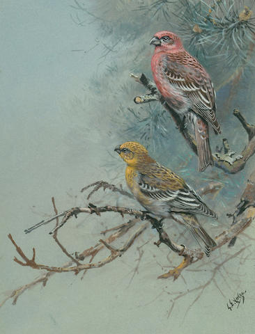 George Edward Lodge (British, 1860-1954) Pink Grosbeak; Two-Barred Crossbill; Red Backed Shrike; Wall Creeper; Water Pipet, 27.5 x 21 cm, (5).