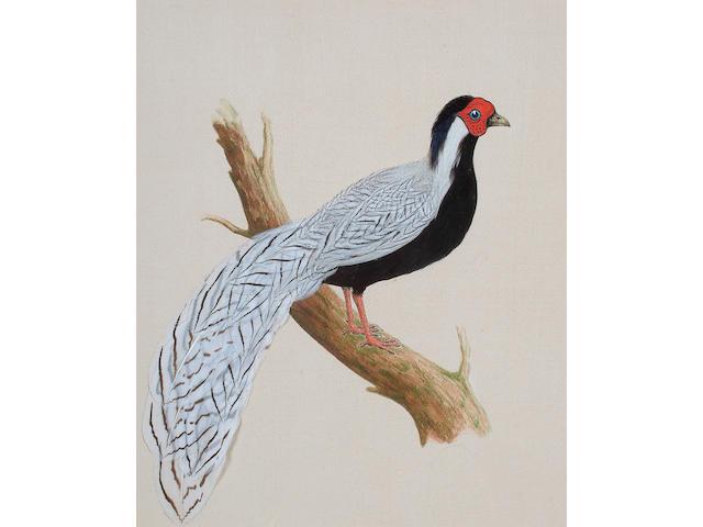 English School 20th Century, Silver Pheasant; Gold Pheasant, 29 x 24 cm. (2)
