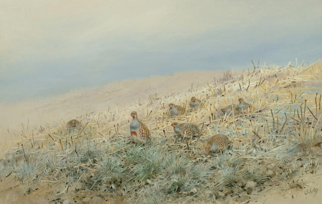 George Edward Lodge (British, 1860-1954) Partridge in stubble, 29 x 45 cm.