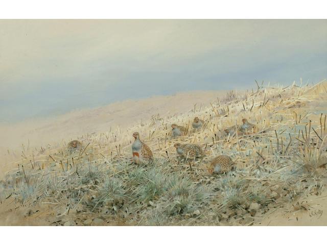 George Edward Lodge (British, 1860-1954) Partridge in stubble, 29 x 45 cm.