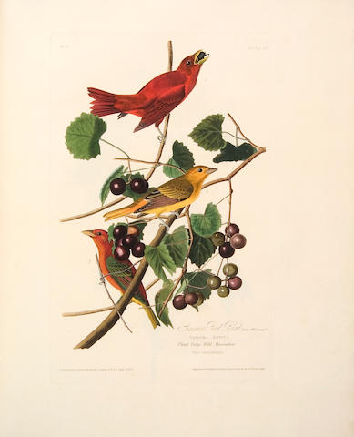 Audubon (John James)