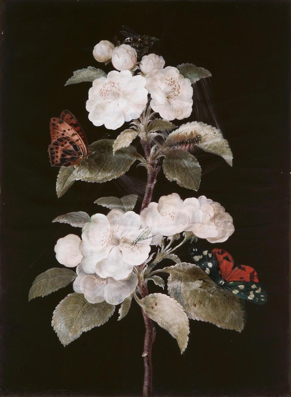 Dietzsch (Johann Cristoph, 1710-1769), Barbara Regina Dietzsch (1706-1783)or Margareta Barbara Dietzsch (1726-1795)