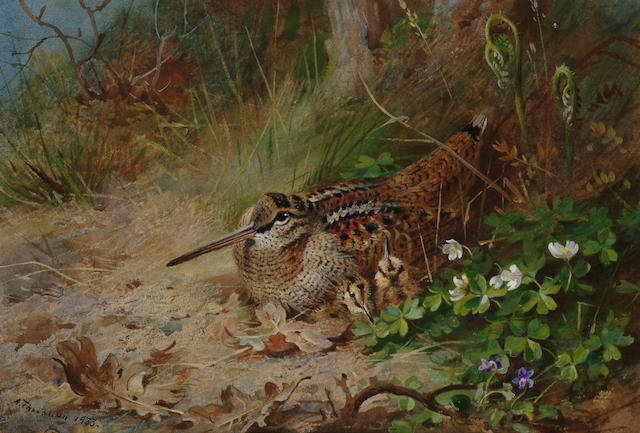 Archibald Thorburn (British, 1860-1935) A Woodcock and its young, 18.5 x 27.5 cm.