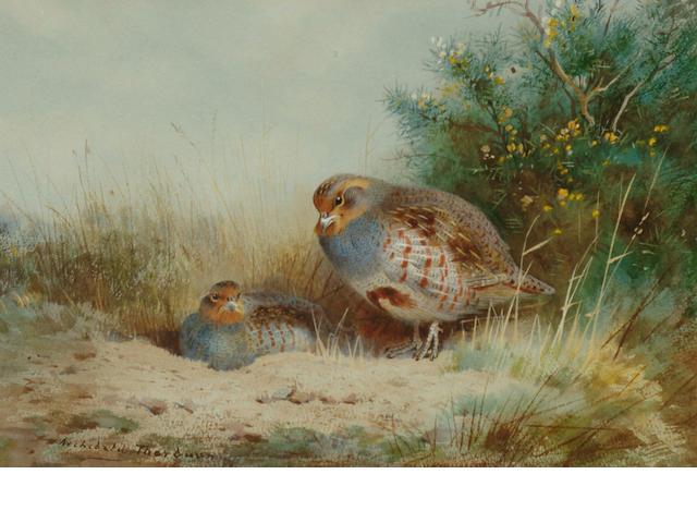 Archibald Thorburn (British, 1860-1935)  Nesting Grey Partridge in cover, 18.5 x 27.5 cm.