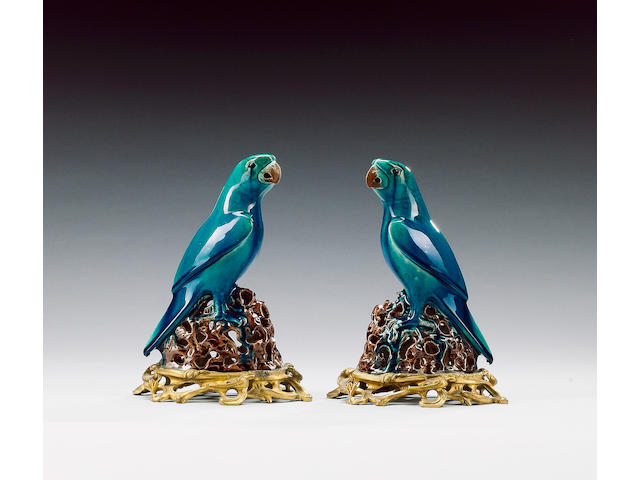 A pair of turquoise parrots,