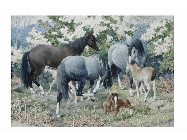 Charles Frederick Tunnicliffe (1901 - 1979) 'Mares and Foals' - Welsh ponies on a hillside, 47.5 x 67.5cm.