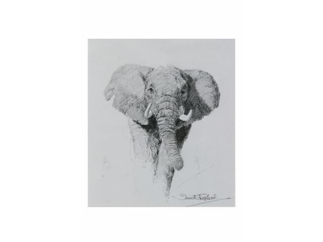 David Shepherd (born 1931) Elephant study, 19 x 16cm.