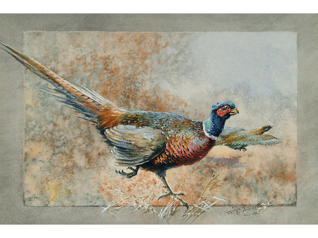 William E. Powell (British, 1878-1955), A cock pheasant, 18.3 x 27.3cm.