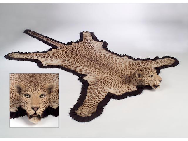 An early 20th Century Leopard Skin,