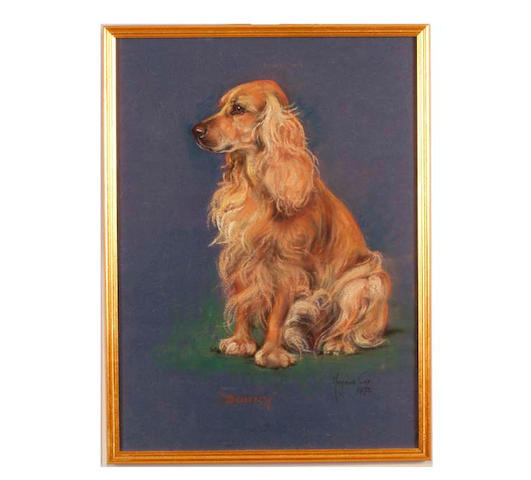 Marjorie Cox (1915-2003) British portrait of a spaniel, entitled 'Bonny' 44cm x 32cm.