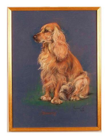 Marjorie Cox (1915-2003) British portrait of a spaniel, entitled 'Bonny' 44cm x 32cm.