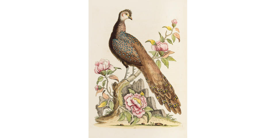 EDWARDS (GEORGE) A Natural History of Uncommon Birds, and of some other rare and Undescribed Animals