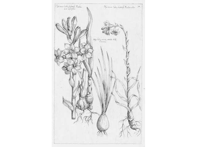 SWEERT (EMANUEL) Florilegium... tractans de variis floribus, et aliis indicis plantis ad vivum delin
