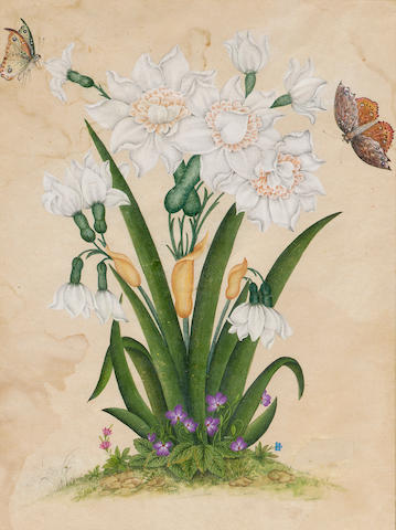 Flowering white irises/daffodils with wild violets growing at their base, butterflies alighting on the flowers Qajar Persia, first half of 19th Century