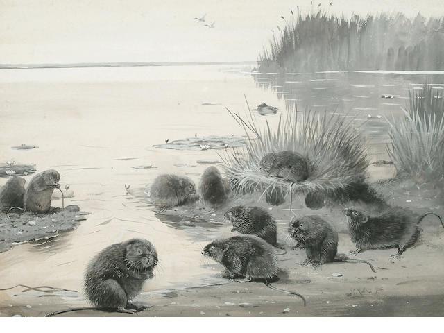 John Guille Millais (British, 1865-1931) Water Voles, 32.5 x 45 cm (12 3/4 x 17 3/4 in)