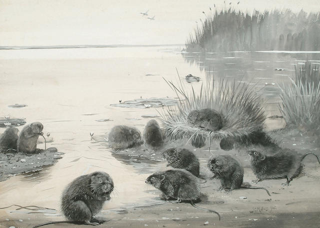 John Guille Millais (British, 1865-1931) Water Voles, 32.5 x 45 cm (12 3/4 x 17 3/4 in)