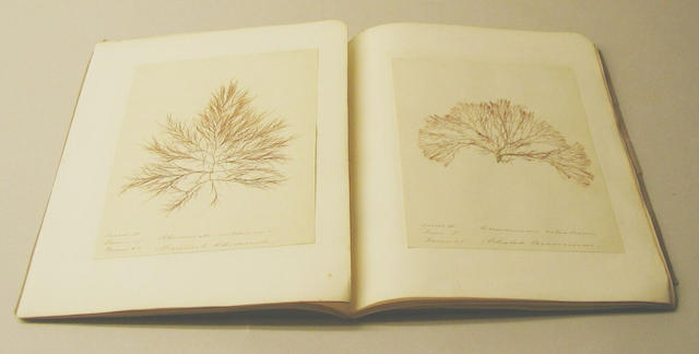 A book containing algae specimens entitled algae Britannica by Edward Smith Dudden, 1851