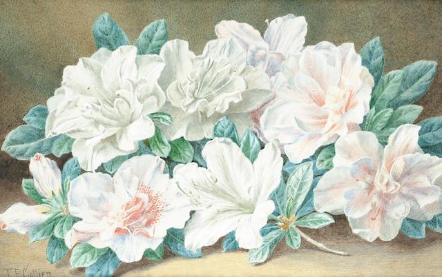 Thomas Frederick Collier (British, fl.1848-1874) Still life of flowers, 17.5 x 26.5 cm (6 7/8 x 10 1/2 in)