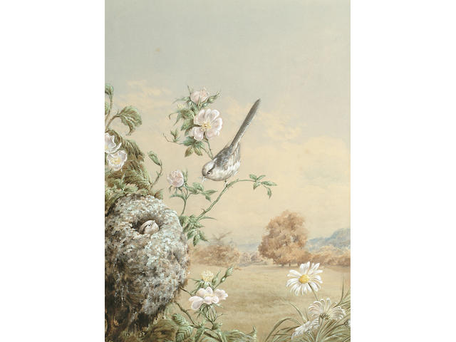 Harry Bright (British, 1846-1895), A Long-tailed tit taking food to her young, 40 x 28.5 cm.