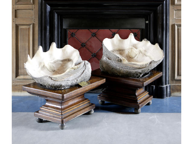 A pair of giant half Clam Shells,