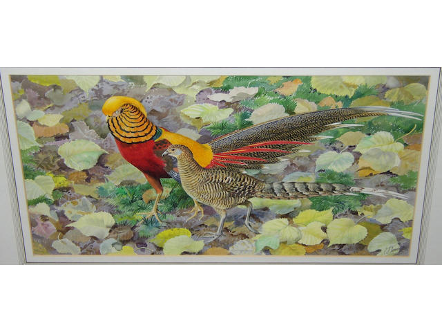Charles Frederick Tunnicliffe RA (1901-1976) British Golden pheasant and hen,