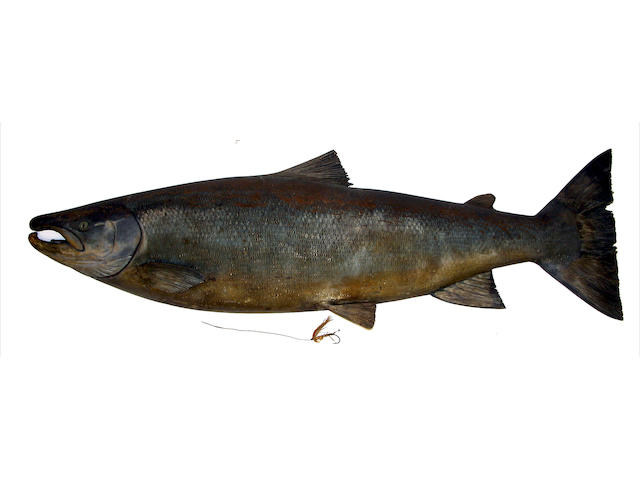 A finely carved and painted half block salmon
