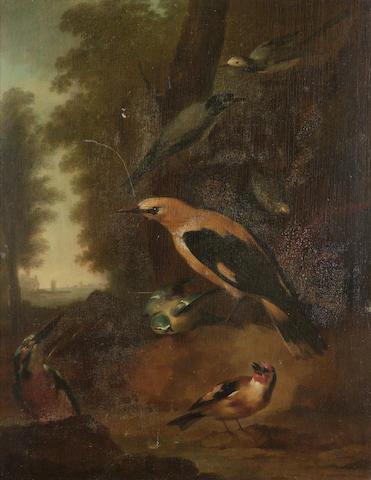 Aert Schouman (Dordrecht 1710-1792 The Hague) A golden oriel, a kingfisher, a blue tit, a goldfinch and wagtails 55.5 x 40.5 cm. (21 7/8 x 16 in.)