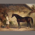 George Cole (British 1810-1885) Portrait of the dark bay horse 'Venison', standing with a groom 71 x
