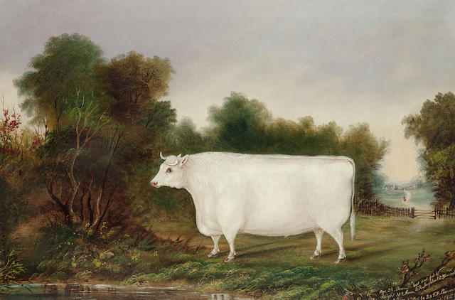 English School, 19th. Century, circa 1855 A prize ox in a landscape 61 x 91.4cm. (24 x 36in.)