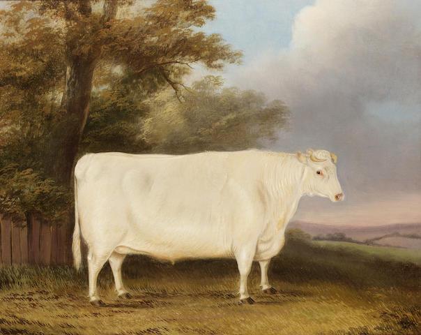J. Blazeby (British 19th century) A prize shorthorn heifer in a landscape 49.5 x 61 cm. (19 1/2 x 24 in.)