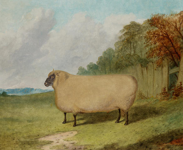 Richard Whitford (British c.1821-1890) A prize ram in a landscape 50.8 x 61 cm. (20 x 24 in.)