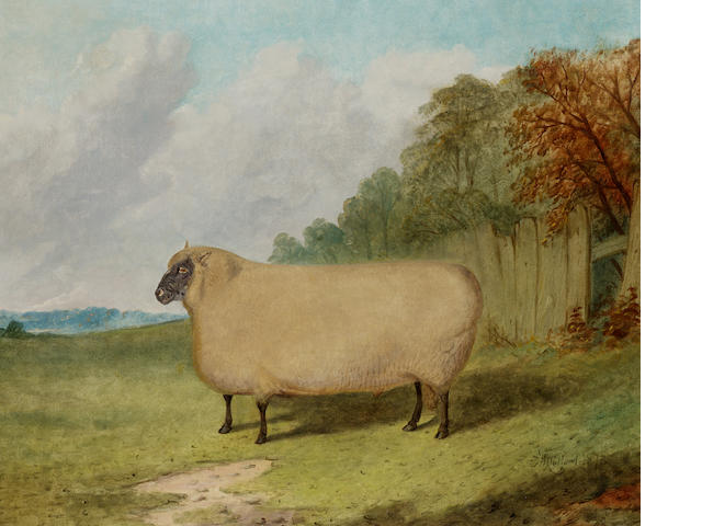 Richard Whitford (British, c.1821-1890) A prize ram in a landscape 50.8 x 61cm. (20 x 24in.)