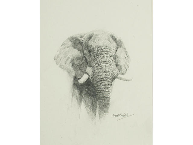 David Shepherd (British, b.1931) Elephant Study 27.5 x 21.5cm (10 3/4 x 8 1/2in)