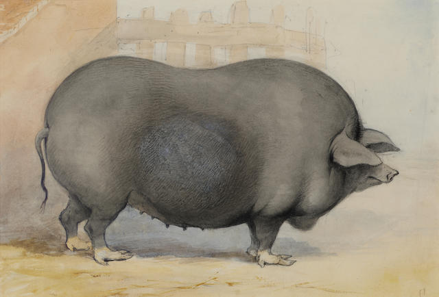 C. Jenny (British, c. 1850) A prize porker 15.2 x 22.2cm. (6 x 8 3/4in.), in a maple frame