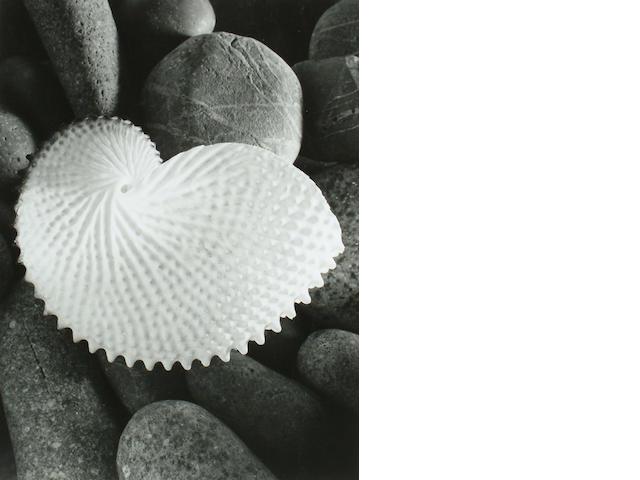 Max Spencer Dupain (Australian, 1911-1992) 'Nautilus', 1954