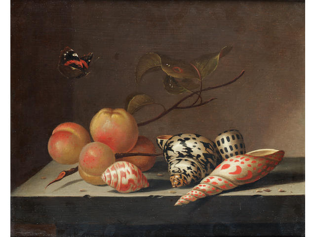 Bartolomeus Assteyn (Dordrecht 1607-1667) Peaches and shells on a stone ledge with a Red Admiral butterfly 27 x 33 cm. (10 5/8 x 13 in.)