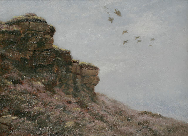 Lodge Peregrine swooping on grouse 0/b